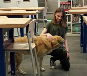 De Topdog HondenSOVAtraining is een training zelfbeheersing en weerbaarheid met een hond als gids.