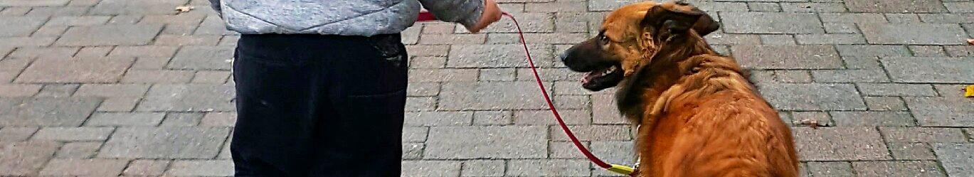 De Topdog HondenSOVAtraining is bedoeld voor kinderen, jongeren en jongvolwassenen